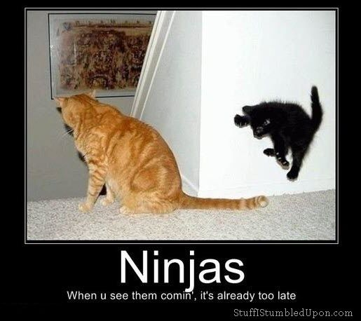 Funny Ninja Memes Ninjas When U See Them Comin Its Already Too Late Picture