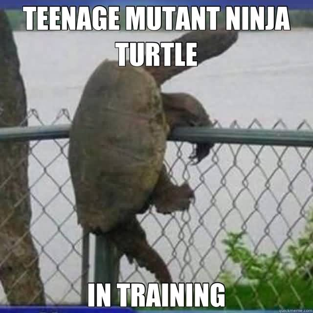Funny Ninja Memes Teenage Mutant Ninja Turtle In Training Image