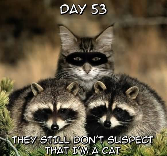Funny Ninja Memes They Still Dont Suspect That I Am A Cat Image