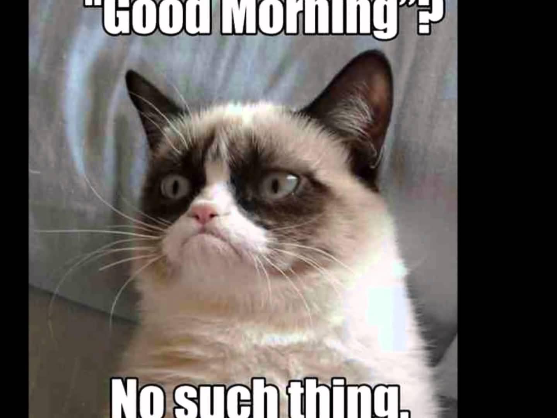 Good morning no such thing Grumpy Cat Meme