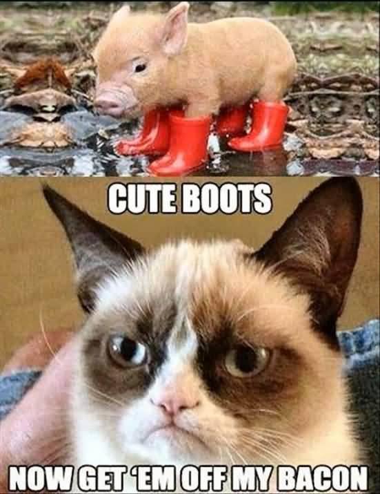 Grumpy Cat Meme Cute boots now get em off my bacon