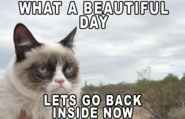 Grumpy Cat Meme What A Beautiful Day Lets Go Back Inside Now