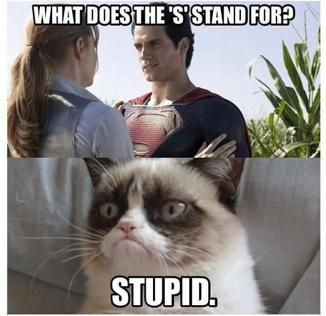 Grumpy Cat Meme What does the S stand for stupid