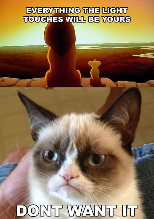Grumpy Cat Memes Everything the light touches will be yours dont want it Photo