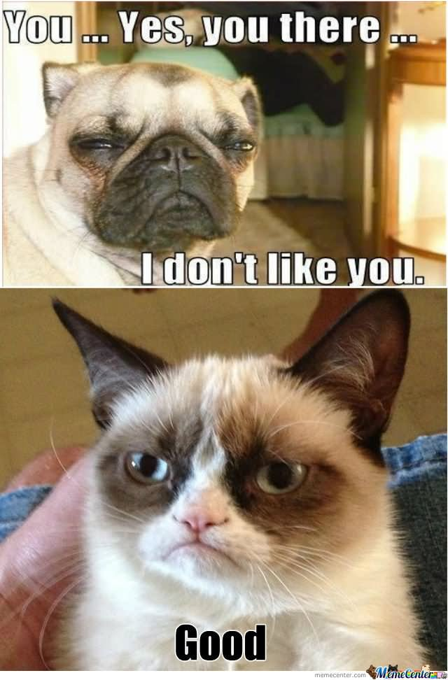 Grumpy Cat Memes You yes you there i don't like you good Picture