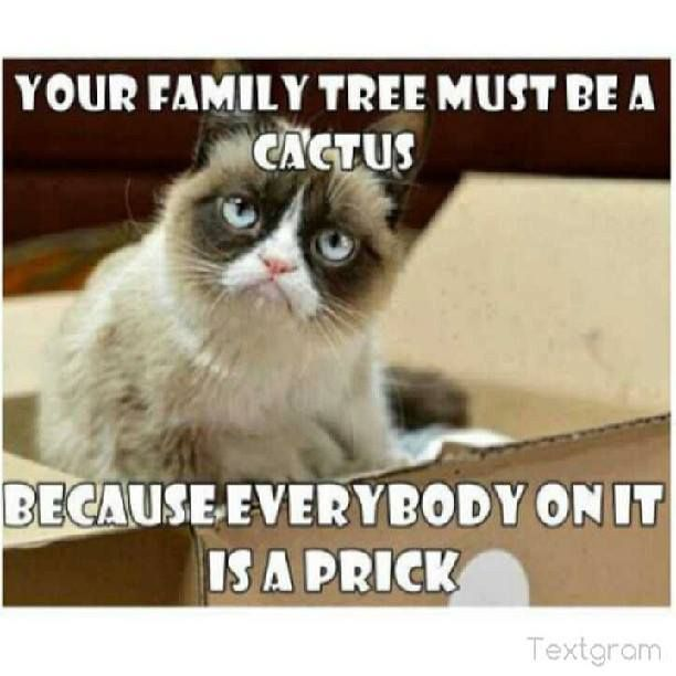 Grumpy Cat Memes Your Family Tree Must Be A Cactus Because Everybody On It Is A Prick Wallpaper