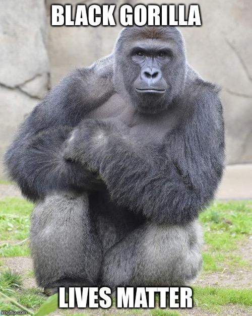 Harambe Meme Black Gorilla Lives Matter