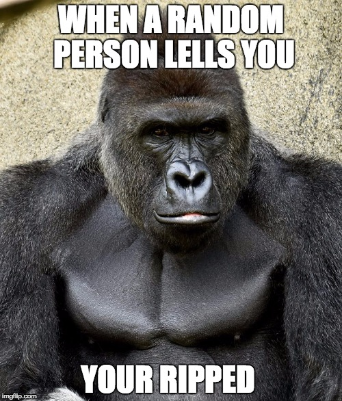 Harambe Meme When A Random Person Lells You You Ripped