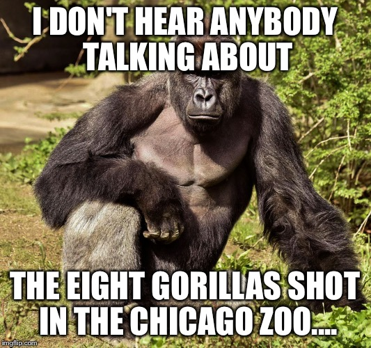 I Don't Hear Anybody Talking About The Eight Gorillas Harambe Meme