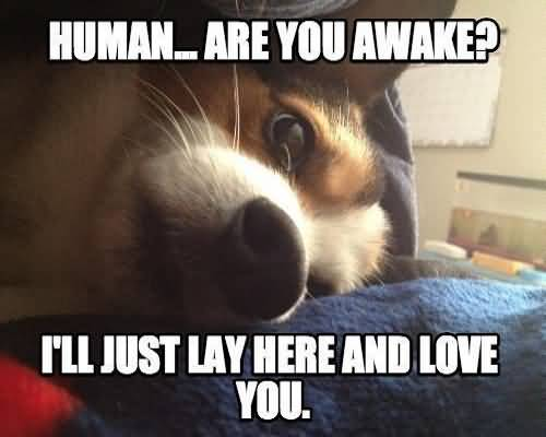 I Love You Memes Human... are you awake i'll just lay here and love you Graphics