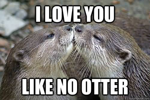 I Love You Memes I love you like no otter Pictures