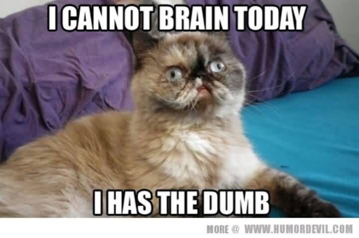 I cannot brain today i has the dumb I Love You Memes Photos