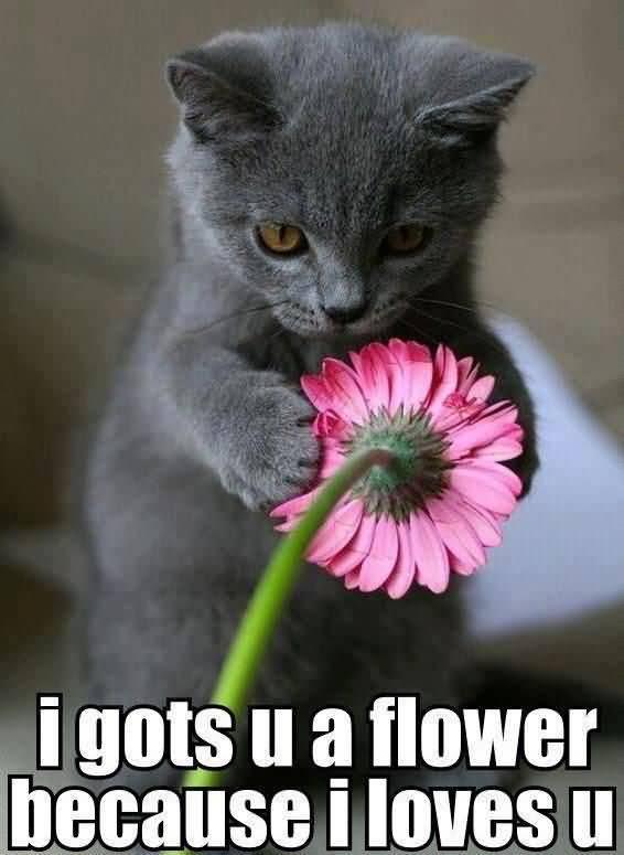 I gots u a flower because i loves u I Love You Memes Images