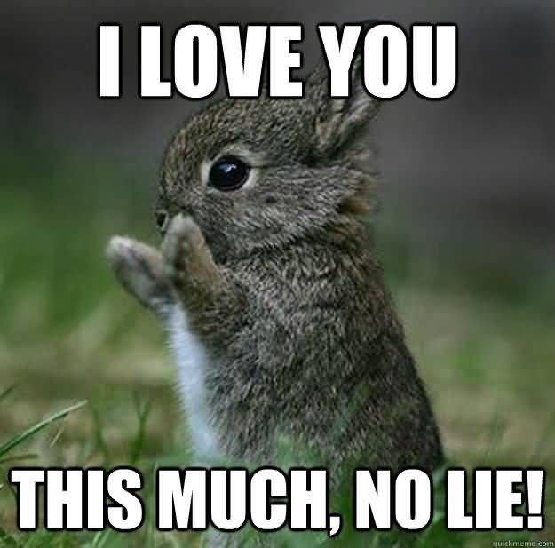 I love you this much no lie! I Love You Memes Images