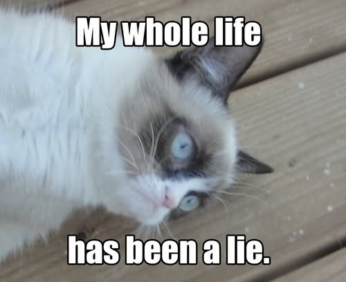 My Whole Life Has Been A Lie Grumpy Cat Meme