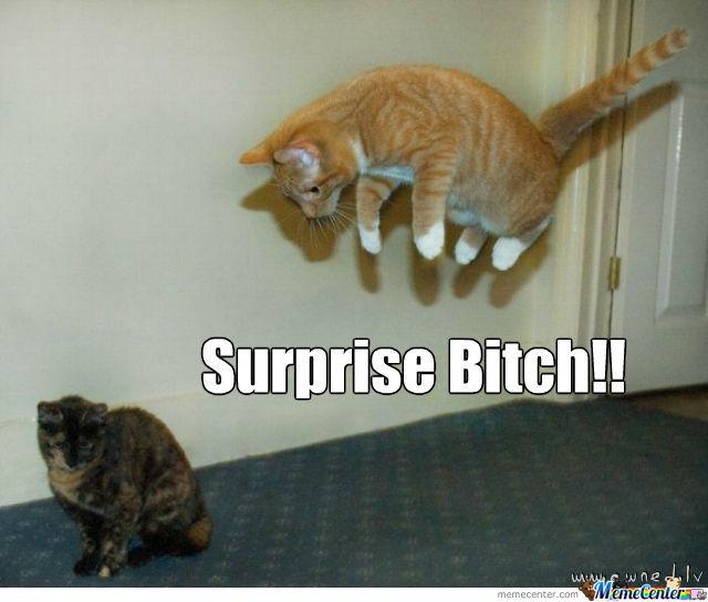 Surprise Bitch Funny Ninja Memes