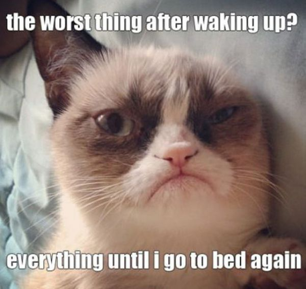 The Wrost Thing After Waking Up Everything Untill I Go To Bed Again Grumpy Cat Meme
