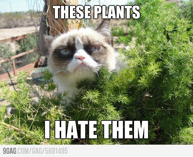 These Plants I Hate Them Grumpy Cat Memes Pic