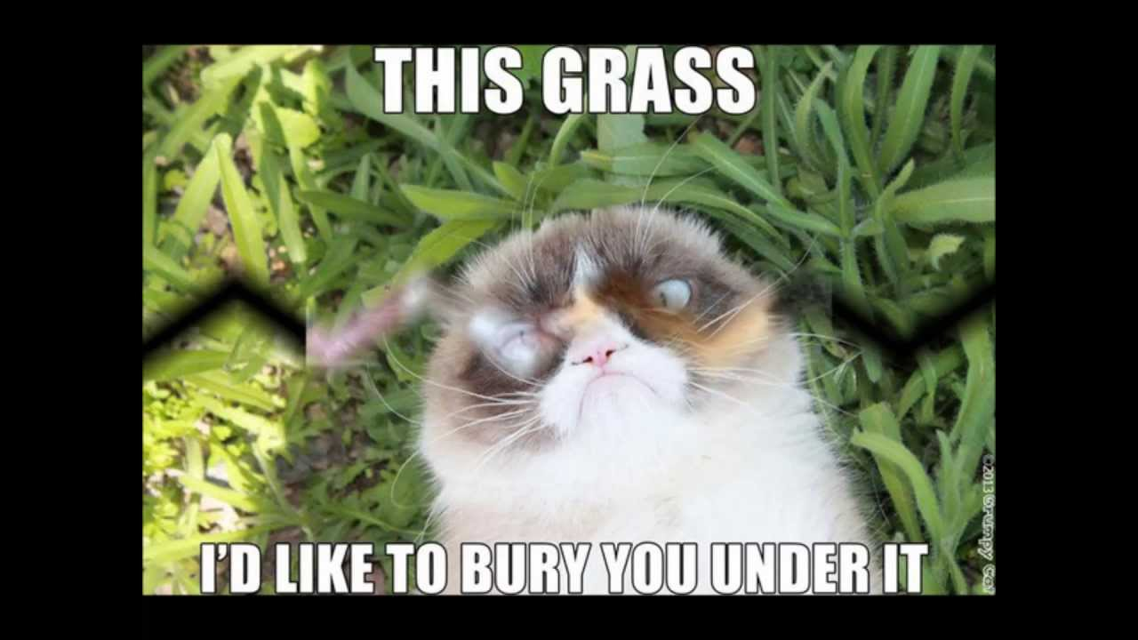 This Grass Id Like To Burry You Under It Grumpy Cat Memes Image