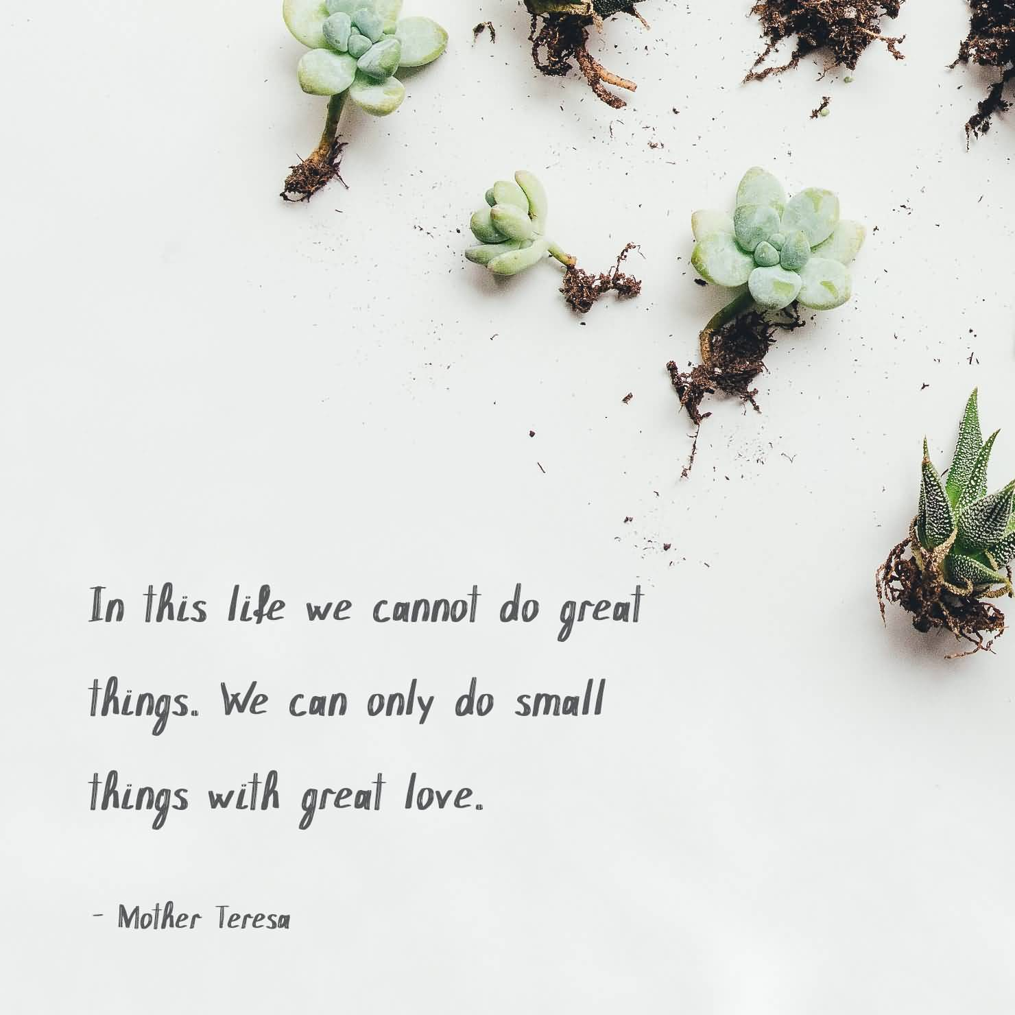 23 Succulent Quotes And Sayings With Images Quotesbae