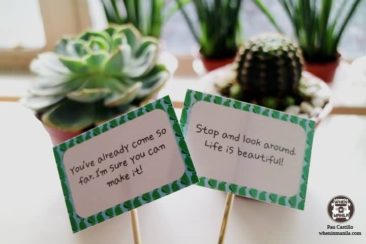 Things To Make With Aloe Vera Plant